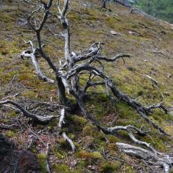 Mount Erskine moss
